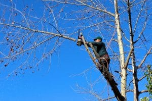 Pourquoi procéder à l'élagage de vos arbres ?
