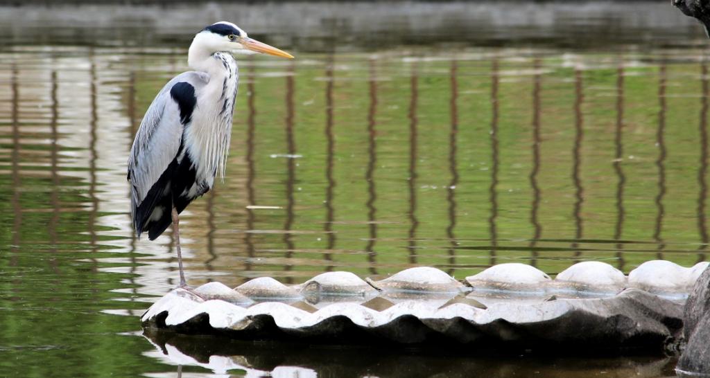 Pourquoi utiliser de faux animaux pour votre bassin de jardin